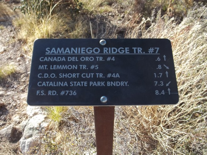Now on the Samaniego, We're on our Way Up to Mt. Lemmon Trail #5.