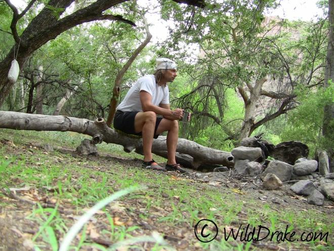 Wild Drake